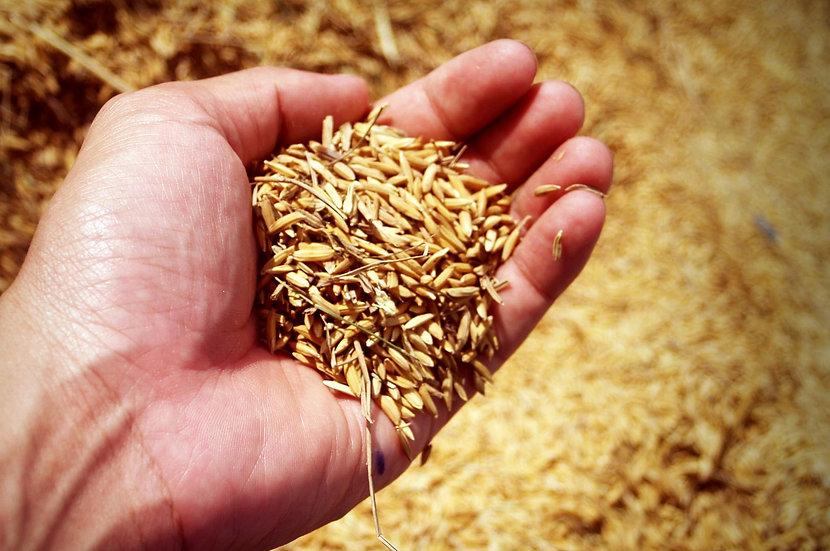 Granza de arroz