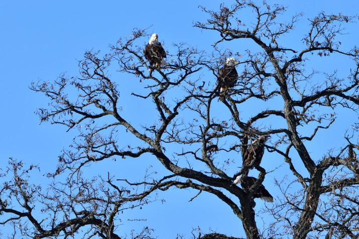 Eagle Tree DSC_9210_1882.JPG