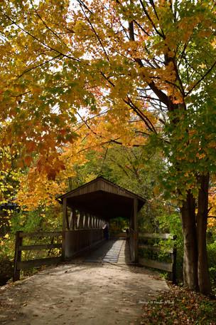 Donald F Nichols Bridge DSC_6199_1249.JP