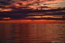 Sunset Flight 2_new.jpg