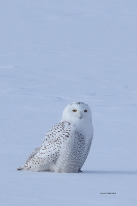 Snowy on snow DSC_6746_1297.JPG