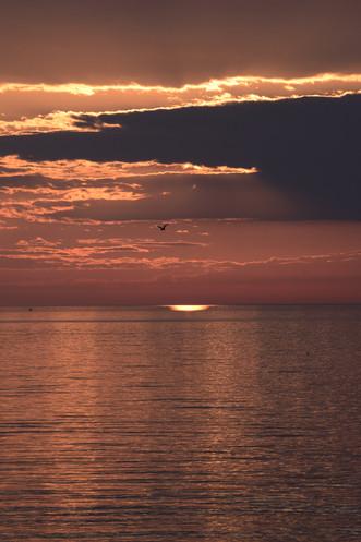 Serenity seagull DSC_0192_edited.JPG