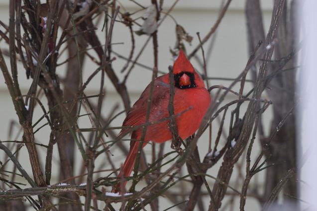 Hiding in the bushes DSC_4884_467.JPG