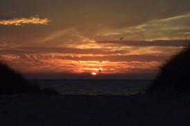 Seagul salute to the sunset DSC_0039.JPG