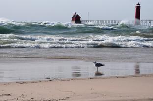 Surf and seagull DSC_0405.JPG