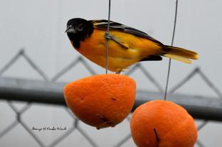 Orange you glad to see me DSC_7627_908.J