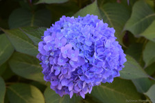 Purple.jpg