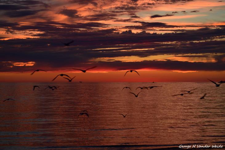 Sunset Flight 1_new.jpg