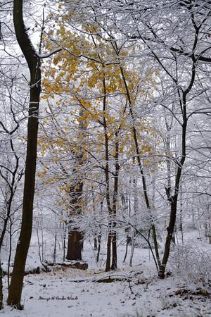 Gold in snow DSC_2506_394.JPG