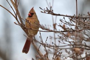 Lady Bird DSC_5443_705.JPG