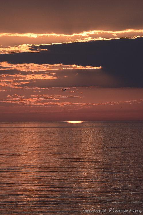 Serenity Seagull Print