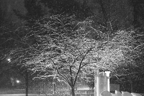 Night Snow DSC_0378 Standout