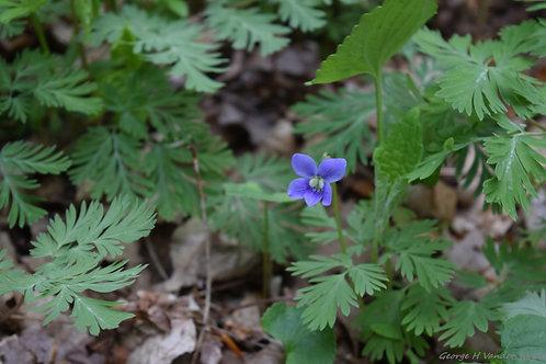 Springtime Wild Flower Print