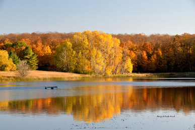 Golden Pond DSC_4573_337.JPG
