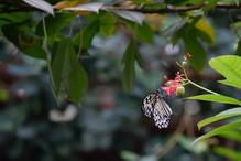 Nectar break 1 DSC_3361_628.JPG