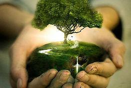 tree_in_hand_manipulations_interesting_p