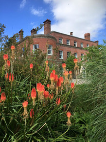 photo of garden flowers and building.jpg