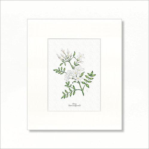 """Print - Vintage Jasmine, 8""""x10"""""""