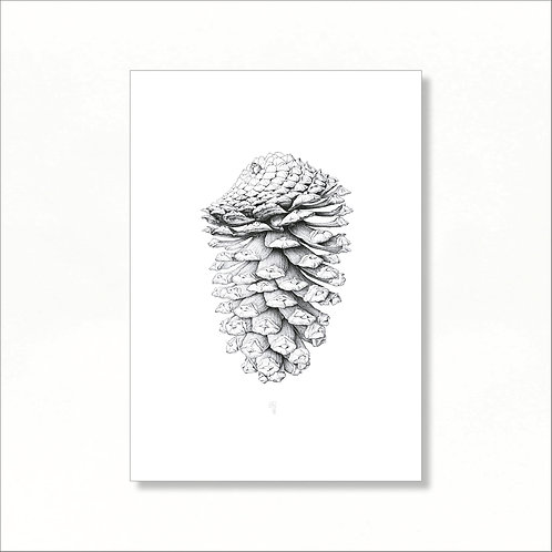 Limited Edition Print - Pine Cone