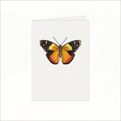 Greeting Card - Yellow Admiral Butterfly