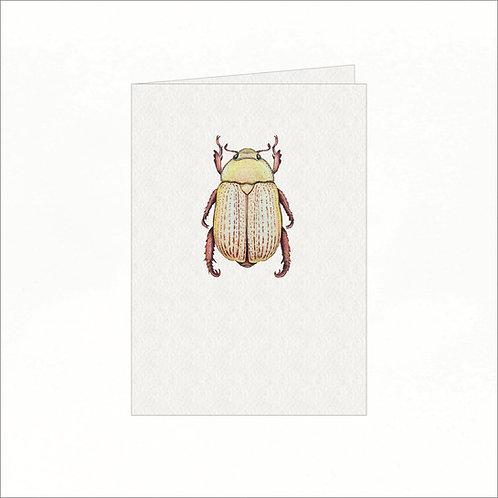 Greeting Card - White Australian Christmas Bug