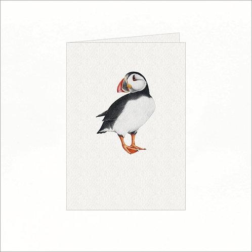 Greeting Card - Atlantic Puffin