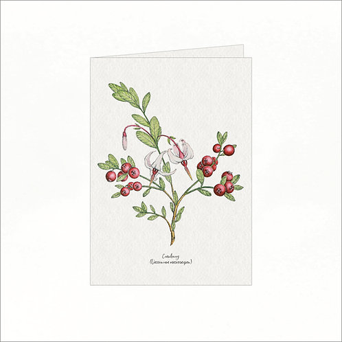 Greeting Card - Vintage Cranberry