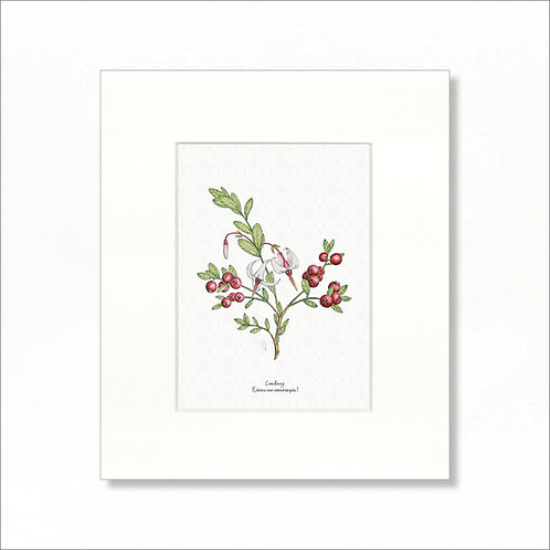 "Print - Vintage Cranberry, 8""x10"""