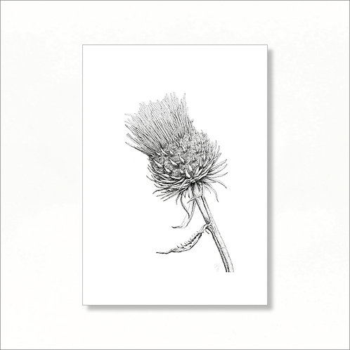 Limited Edition Print - Thistle