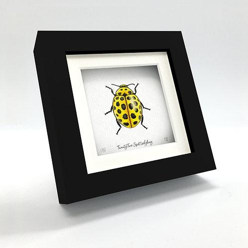 Miniature - 22-Spot Ladybug