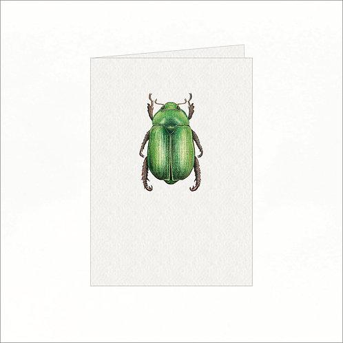 Greeting Card - Green Australian Christmas Bug