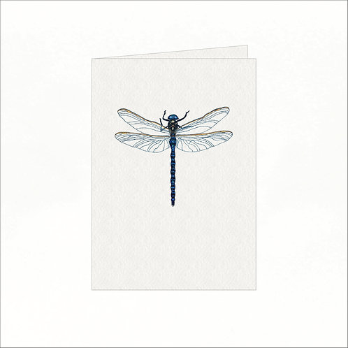 Greeting Card - Azure Hawker Dragonfly