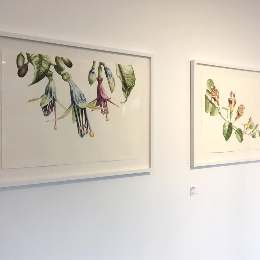 Botanical Art Worldwide
