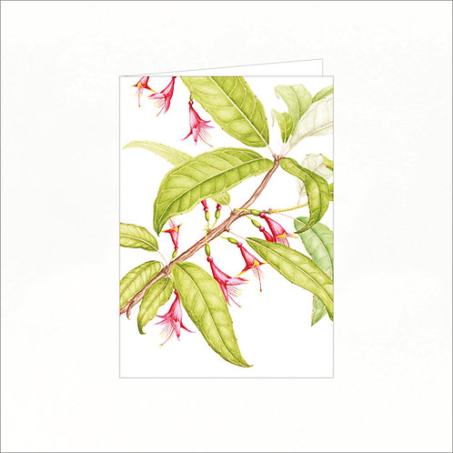 Greeting Card - Kotukutuku (Fuchsia excorticata)