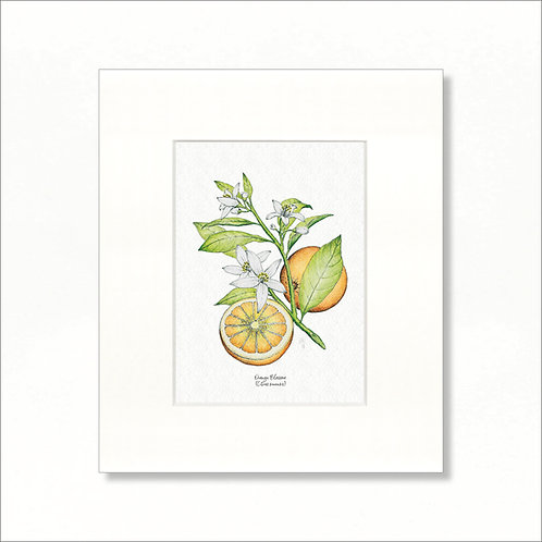 "Print - Vintage Orange Blossom, 8""x10"""
