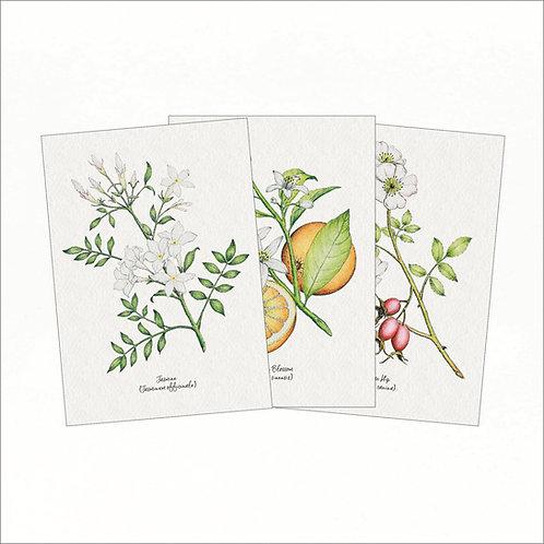 Set of 3 Vintage Greeting Cards - Jasmine, Orange Blossom, Rose Hip