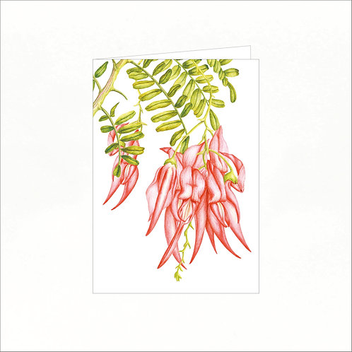 Greeting Card - Kakabeak (Clianthus puniceus)