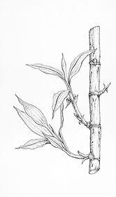 Bamboo FINAL.jpg