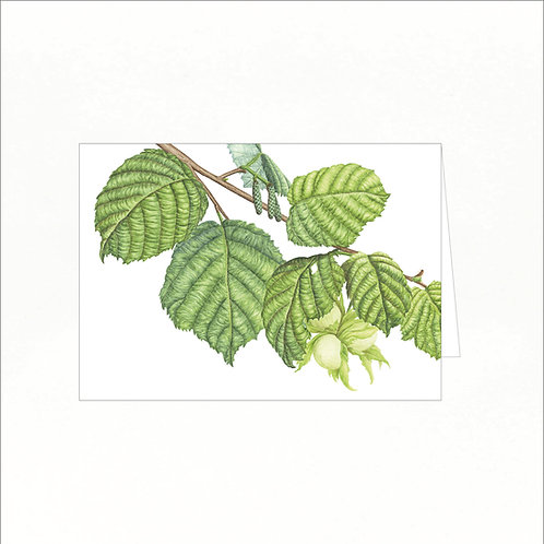 Greeting Card - Hazel (Corylus avellana)