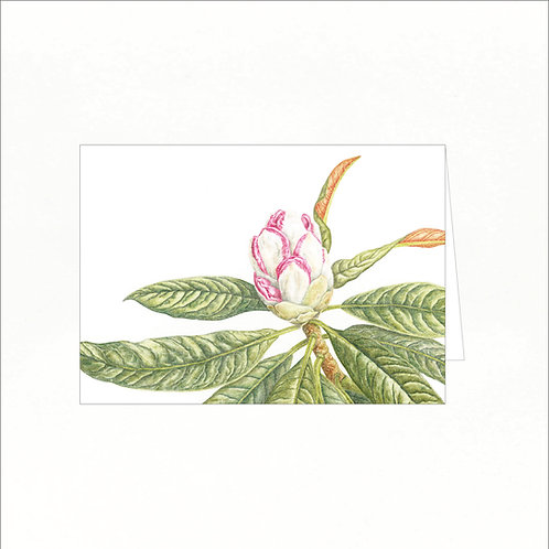 Greeting Card - Rhododendron cinnamomeum