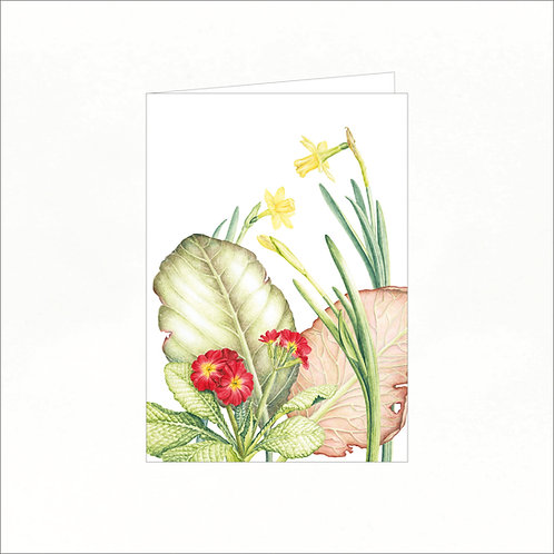 Greeting Card - Primula, bergenia, narcissus