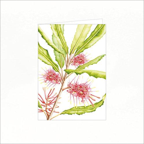 Greeting Card - Rewarewa (Knightia excelsa)