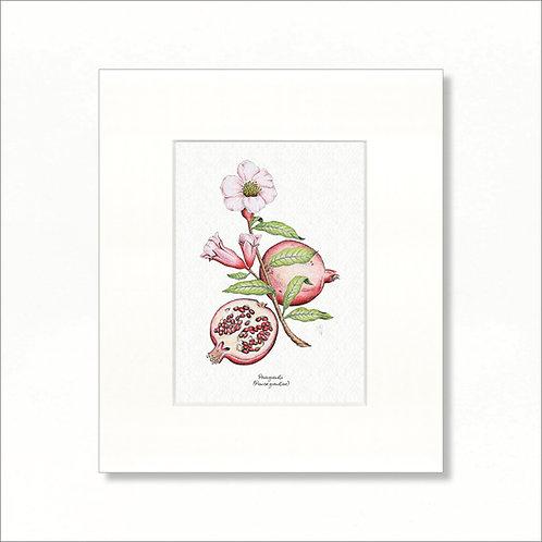 "Print - Vintage Pomegranate, 8""x10"""