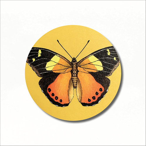 Coaster - Yellow Admiral Butterfly