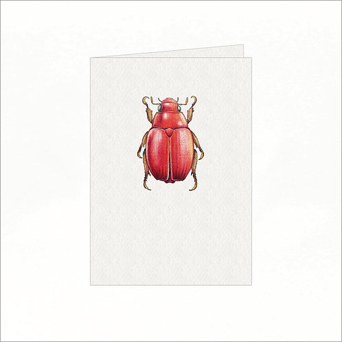 Greeting Card - Red Australian Christmas Bug