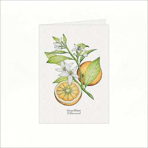 Greeting Card - Vintage Orange Blossom