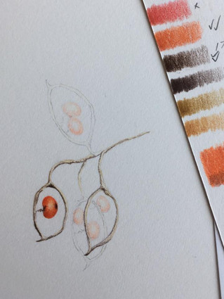Demonstration using coloured pencils at Royal Botanic Garden Edinburgh