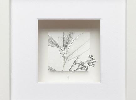 TheEdinburgh Society of Botanical Artists(ESBA) annual Christmas Exhibition is on now!