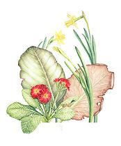 Spring Composition - Bergenia, Primula, Narcissus, watercolour