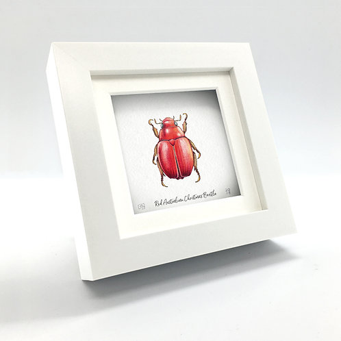 Miniature - Red Australian Christmas Beetle